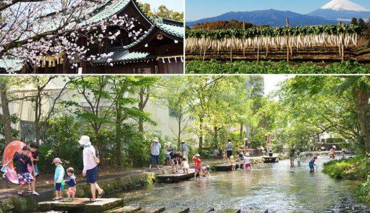 【ふるさと納税】静岡県三島市のおすすめ返礼品と主要10サイトの一覧まとめ